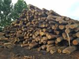 FSC Certified Hardwood Logs - FSC 22-30 cm Oak Saw Logs from Romania, Muntenia