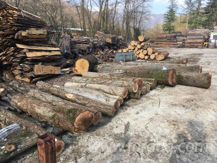 Walnut-Saw-Logs