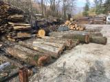 Laubrundholz  - 30; 90 cm Walnuß Schnittholzstämme Italien Toscana Italien zu Verkaufen