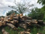 Maple  Hardwood Logs - -- mm Sycamore Maple Saw Logs from Romania, Bihor