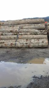 Hardwood  Logs For Sale - Oak Logs