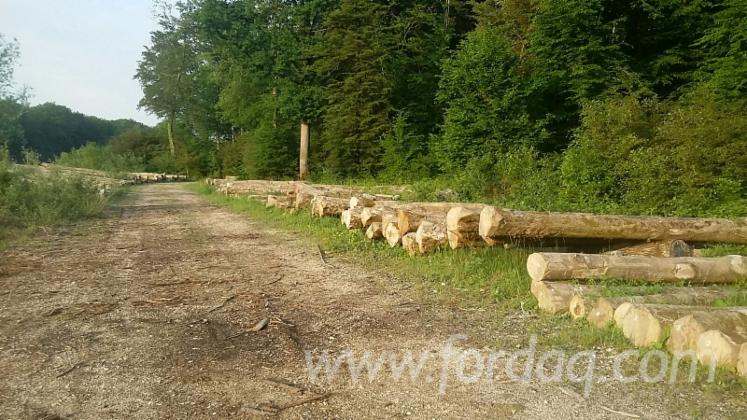 30--cm-White-Ash-Saw-Logs-from