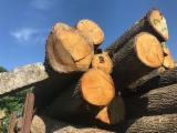 Find best timber supplies on Fordaq - 30+ 40% / 40+ 60% mm Oak Saw Logs Belgium