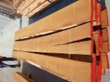 Offers Belgium - AB Beech Half-Edged Boards, 50 mm
