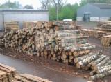 Unedged Hardwood Timber - Unedged Birch Lumber - High Quality, KD, 49mm