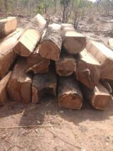 null - Schnittholzstämme, Rhodesian Copalwood, African Rosewood