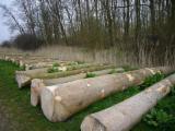 Păduri Şi Buşteni - Cumpar Bustean De Gater Frasin