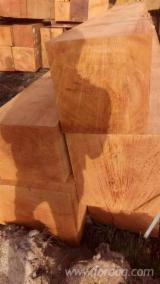 Hardwood  Logs Demands - Doussie Saw Logs 70+ cm