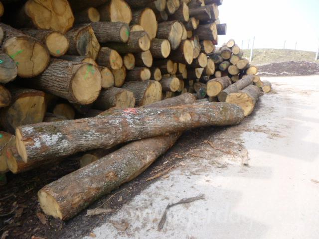 BC-European-Oak-Saw-Logs