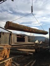 Beech  Hardwood Logs - Beech Wood Veneer Logs