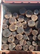 Finden Sie Holzlieferanten auf Fordaq - Schnittholzstämme, Guayacan
