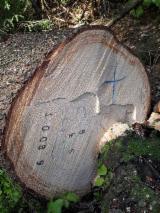 Cele mai noi oferte pentru produse din lemn - Fordaq - Vand Bustean De Gater Molid