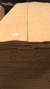 Find best timber supplies on Fordaq - Alsancak Wood Products Industries Inc. - KD Beech Veneer, 0.57 mm