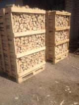 Lettland - Fordaq Online Markt - Hain- Und Weissbuche Brennholz Ungespalten