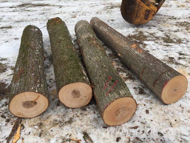 Hard-Maple-Saw-Logs-12-