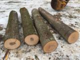 Hard Maple Saw Logs 12+ diameter