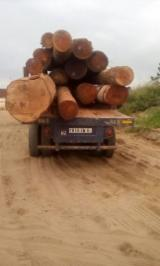 Forest and Logs - Urgent Tali Doussie Padouk Essia Logs For Sale