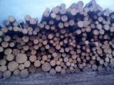 Offers Russia - Aspen sawlogs