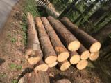 Spruce  20+ cm A,B,C Saw Logs from Poland