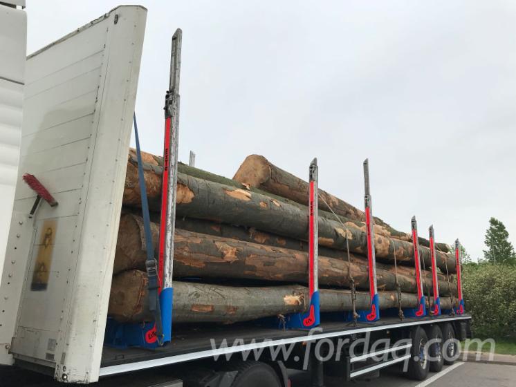 Saw-Logs--Beech--Oak