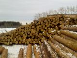 Softwood  Logs - Larch , Siberian Pine, Spruce  140;  400 mm 1;  3 Saw Logs from Russia