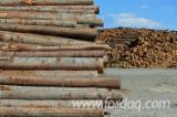 Nadelrundholz Zu Verkaufen - Schnittholzstämme, Kiefer  - Föhre, ISPM 15