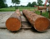 Forest and Logs - Buying Doussie Saw Logs, 70+ cm
