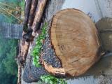 Veneer Logs - Lebanon cedar 1000 mm A Veneer Logs from France