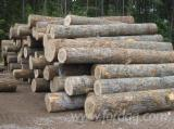 Forest and Logs - Need White Ash Logs 30+ cm