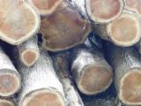 Păduri Şi Buşteni America De Sud - Vand Bustean De Gater Teak