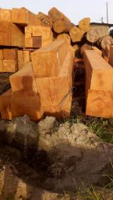 森林及原木 非洲 - 方形原木, 非洲格木