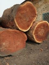 Padouk Hardwood Logs - Padouk Saw Logs, 80+ cm