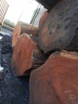Wälder und Rundholz - Schnittholzstämme, Azobé