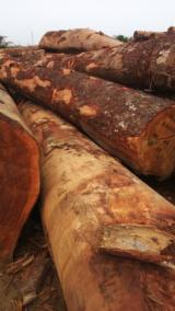 Offers Cameroon - Offer for African Hardwood