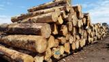 Oceania Softwood Logs - Radiata Pine Logs from Australia