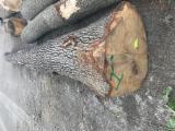 塞尔维亚 - Fordaq 在线 市場 - 锯木, 橡木