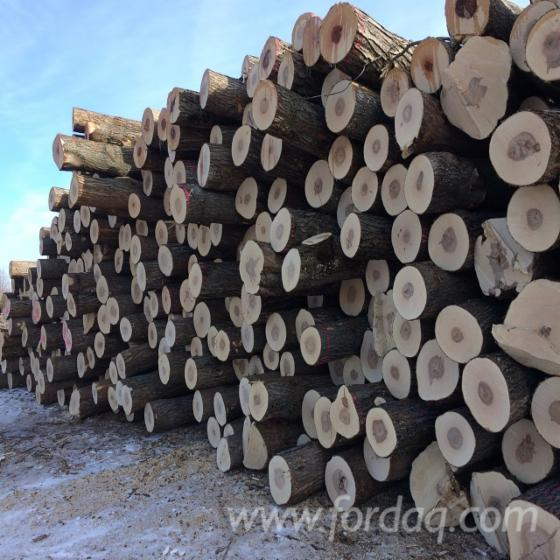 Black-Walnut--Hard-Maple--Red-Oak-logs
