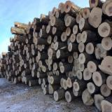 Canada - Fordaq Online market - Black Walnut, Hard Maple, Red Oak logs, 2 SC
