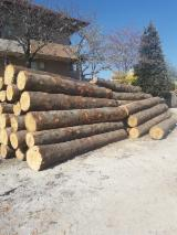 Germany Softwood Logs - Spruce  20+ cm ABC Saw Logs from Slovenia