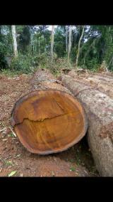 Venta Troncos Para Aserrar Tali  Camerún