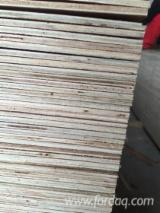 Bintangor Plywood / Sapele Plywood 4; 6 mm - Natural Plywood from Vietnam
