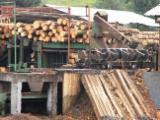 薪材、木质颗粒及木废料 - 木芯片 – 树皮 – 锯切 – 锯屑 – 刨削 取自森林之木芯片 放射松
