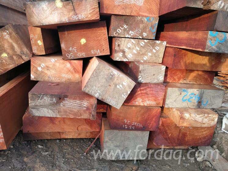 Stamme Fur Die Industrie Faserholz Cocobolo Palissander Cumaru