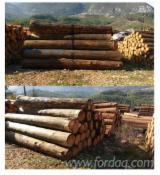 Schnittholzstämme, Libanon Zeder