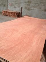 Veneer And Panels Asia - Bintangor Plywood BB/CC grade
