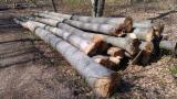 Hardwood  Logs - Beech logs ABC
