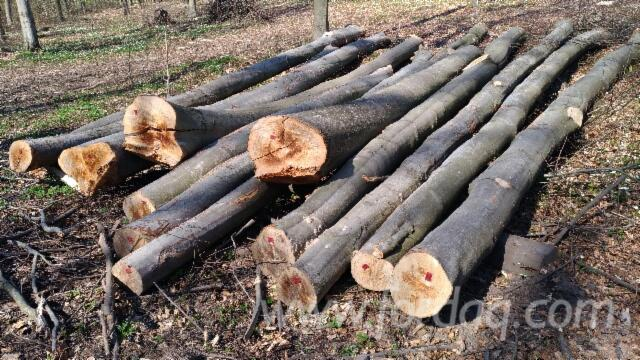 Beech logs ABC