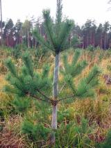 Forest & Harvesting Equipment - Offer for Spiral tree guards