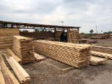 Belarus Supplies - Offer for Planks (boards), Pine - Scots Pine