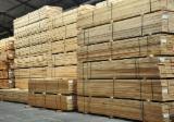 Finden Sie Holzlieferanten auf Fordaq - Nordmann-Tanne